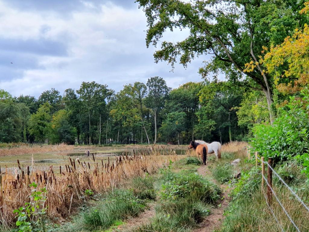 grazers in natuurdomein Dauteweyers Diepenbeek