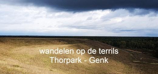 Thorpark terrils