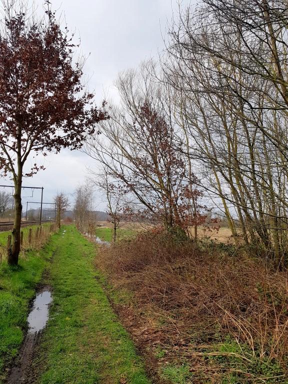 Landschapswandeling Testelt Demerbroeken: een makkie voor wie de wandeling begint vanaf het station