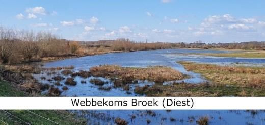 Webbekoms Broek