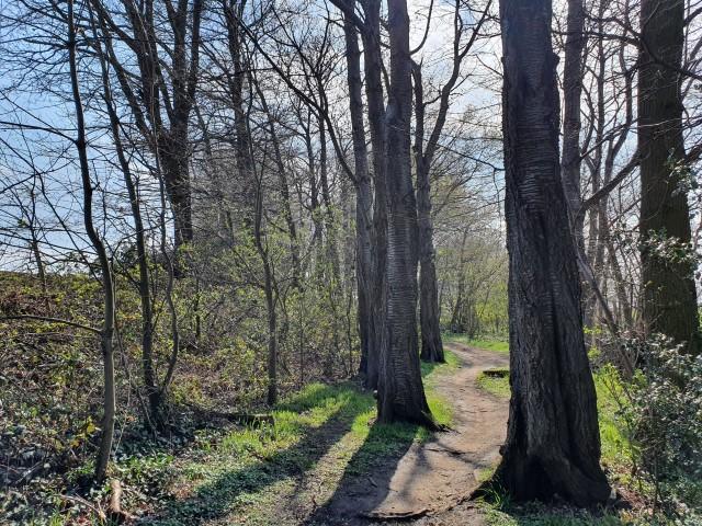Kwadeschuurwandeling. Toch een beetje bos.