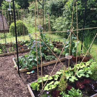 Newly planted up fruit cage, Mark Cross, East Sussex