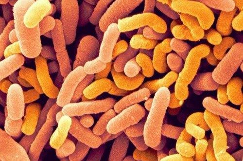 Bifidobacterium breve - Gutamin 7 reviews 2020