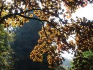 De ZintuigenTuin - Seizoen - Herfst (11)