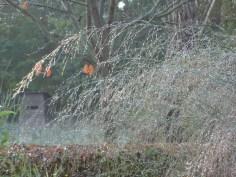De ZintuigenTuin - Seizoen - Herfst (21)