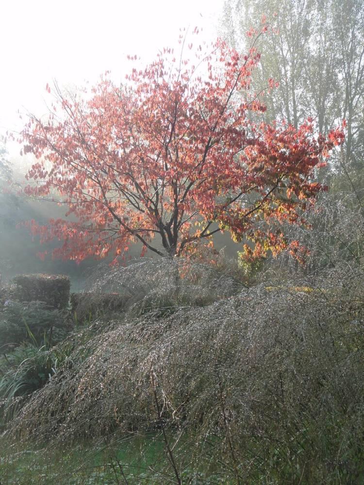 De ZintuigenTuin - Seizoen - Herfst (65)