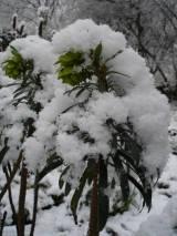 De ZintuigenTuin - Seizoen -Winter - (37)