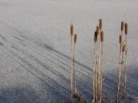 De ZintuigenTuin - Seizoen -Winter - (48)