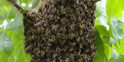 De Zintuigentuin - bijen
