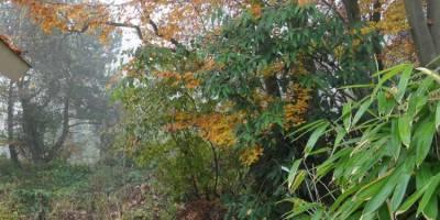 Beuk in de herfst - ZinTUIgeN