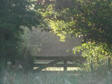 Nazomer - De ZintuigenTuin - Heerhugowaard