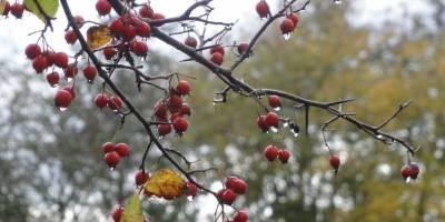 Vallende bladeren
