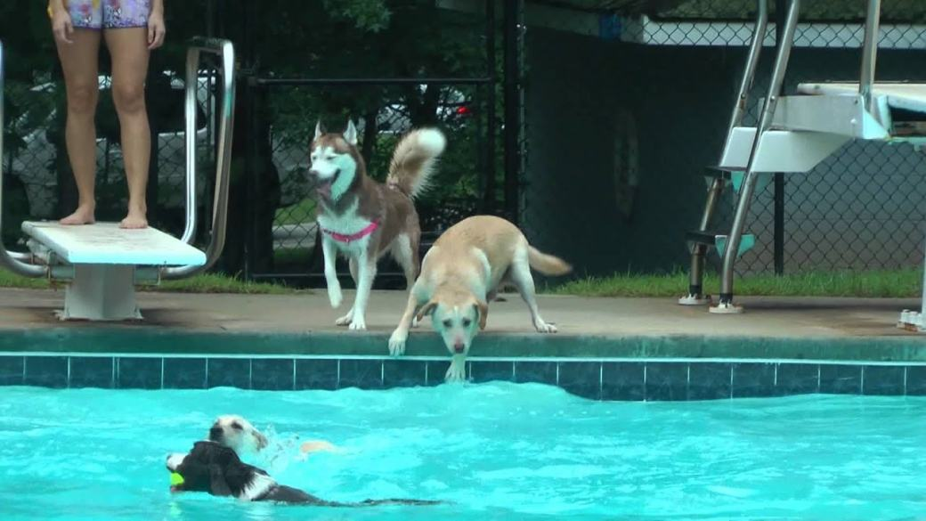 pupper pool party