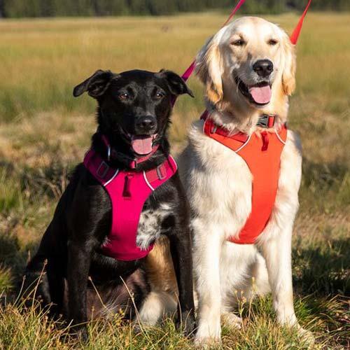 Front Range Ruffwear Dog Harness