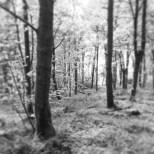 Larbert Woods, Scotland