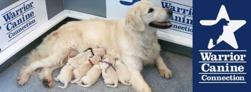 Warrior Canine Connection Mom and her pups