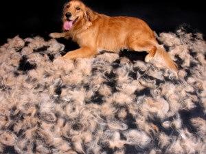 dogshedding1