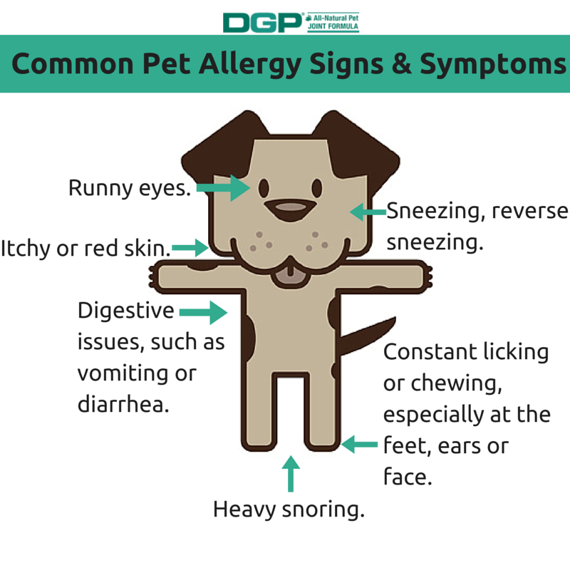 Pet Allergy Signs and Symptoms - DGP For Pets
