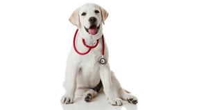 What is Pet Insurance and is it Important?