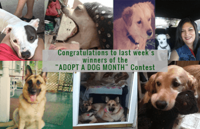 Adopted-Contest-Winners-1