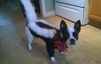 Cassi in her skunk costume