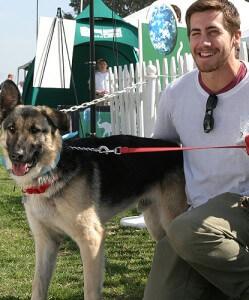 Gyllenhaal's Dog Atticus