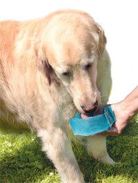 doggie drinklet