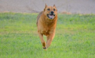 Sheba is back to her happy self after DGP