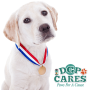 DGP Cares 2016 winners blog