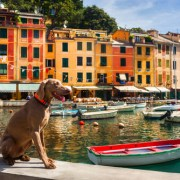 traveling with dogs in the summer