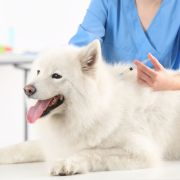 guide to dog vaccinations