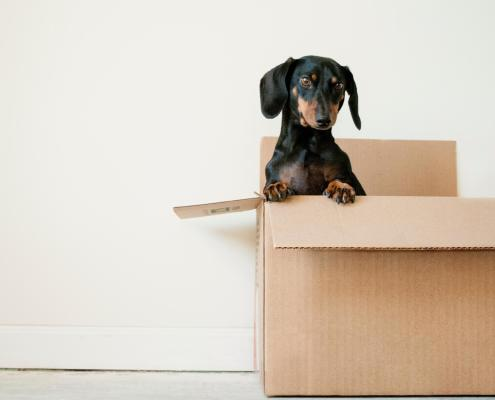 Care For Your Pets While Moving Across the Country