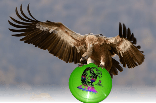 Discraft Vulture Review disc golf