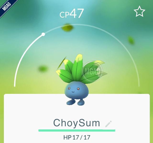 choysum