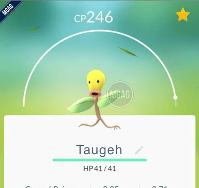 taugeh