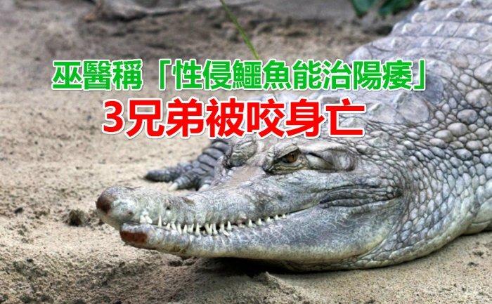 crocodile_sex