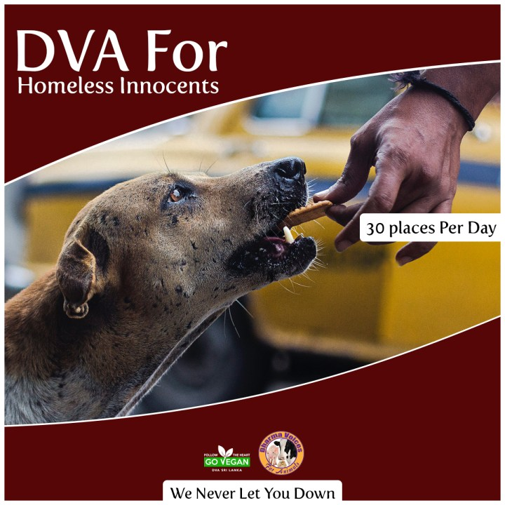 DVA for Homeless Innocents