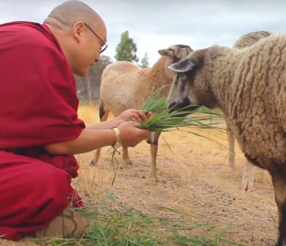 Animals & the Buddha