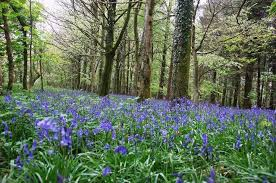 blue bell woods holiday cottage nearby