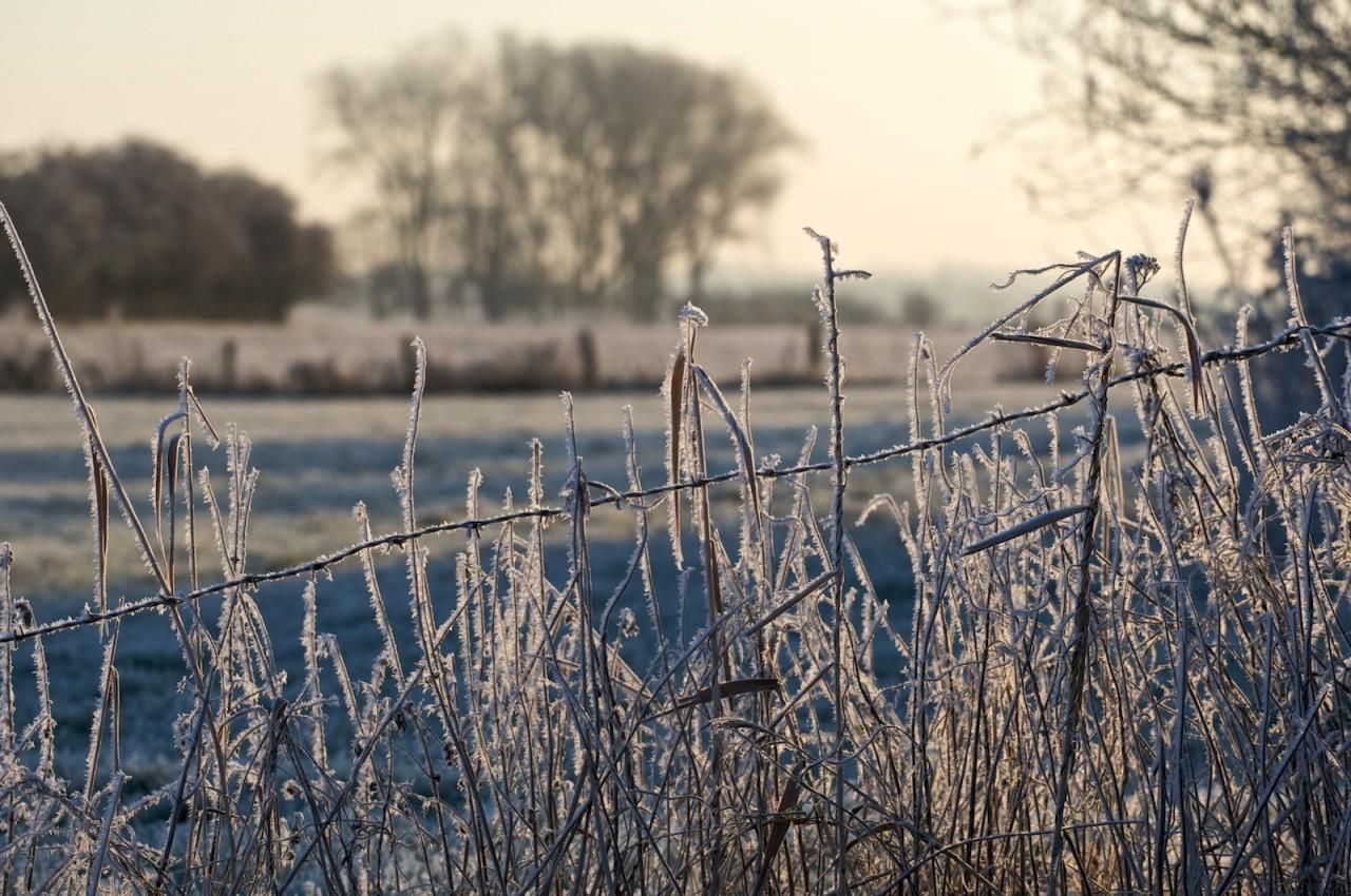 Frostiges an den Allerwiesen