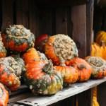 Kürbiswoche - Sortenvielfalt der Kürbisse