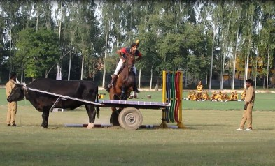 Horse riding demonstration 2