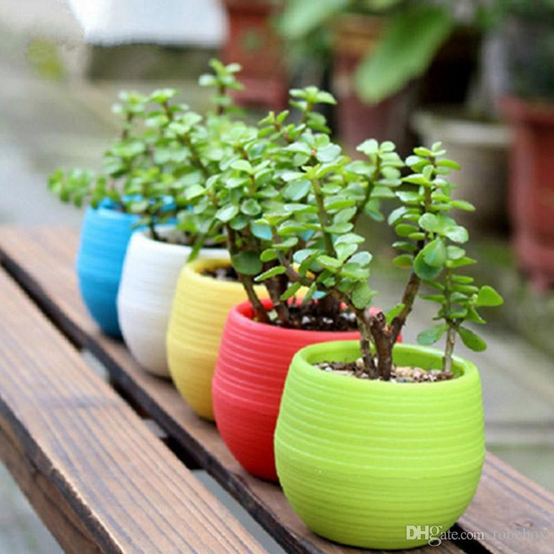 Floating Bonsai Tree Cost