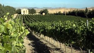 Gerbino vigneti vineyards