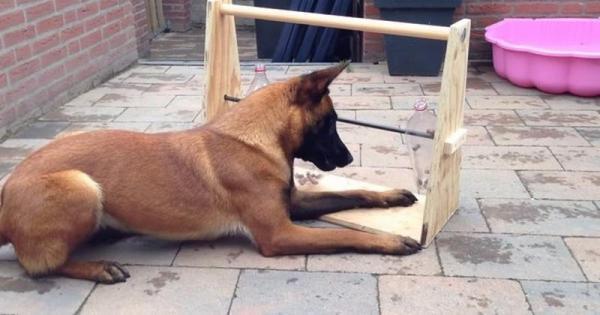 1427538657 f3ccdd27d2000e3f9255a7e3e2c48800 600x315 Κρατήσετε το σκύλο σας απασχολημένο για ώρες με αυτό το απλό και έξυπνο κολπάκι