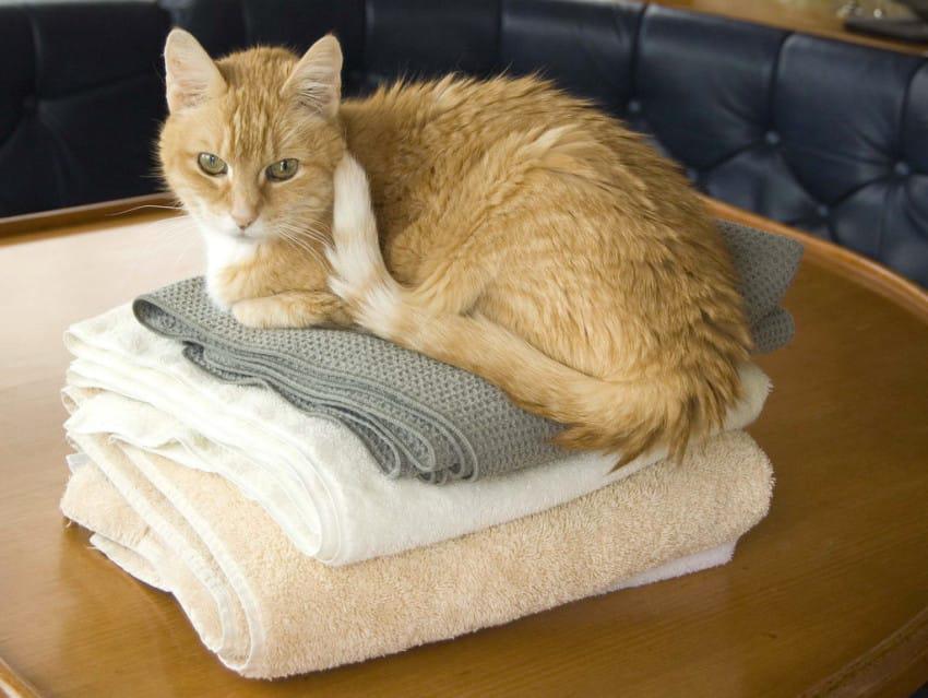Cat on laundry