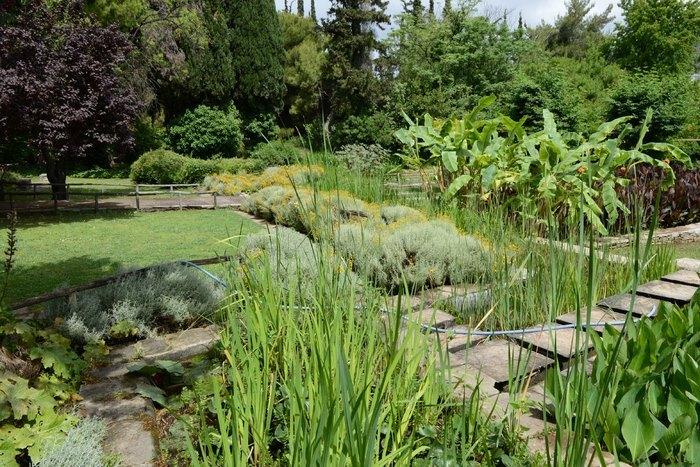 Ο μεγαλύτερος βοτανικός κήπος της ανατολικής Μεσογείου βρίσκεται στην Αθήνα. Και οι περισσότεροι δεν τον γνωρίζουν καν! - Εικόνα 0