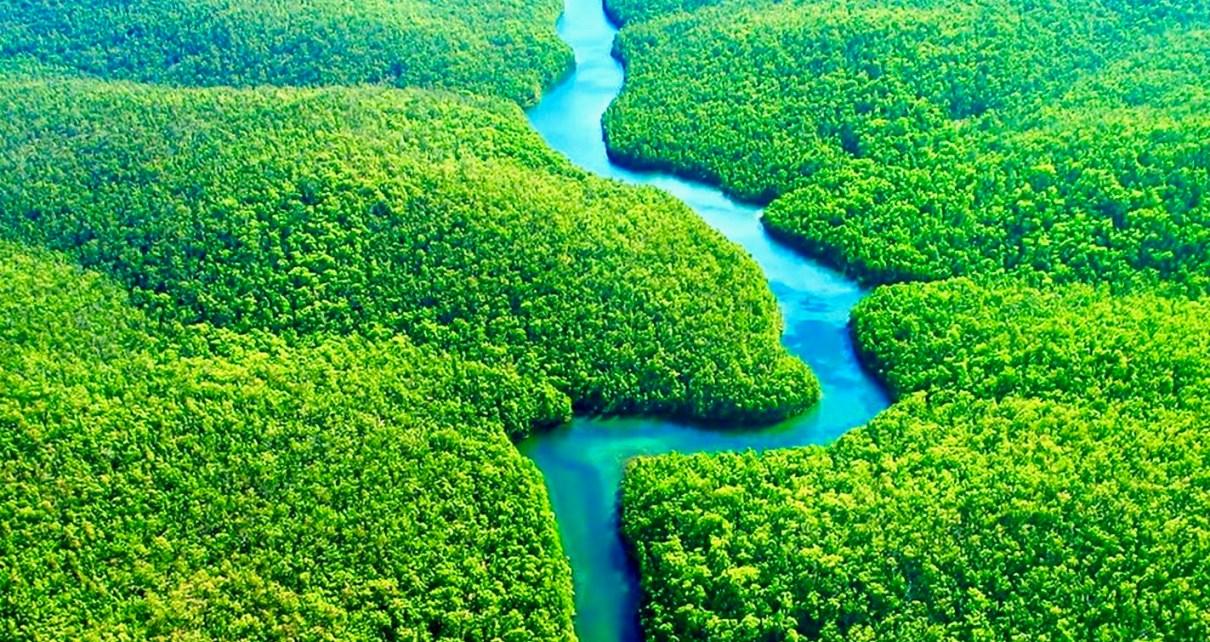 Lasy Amazonii