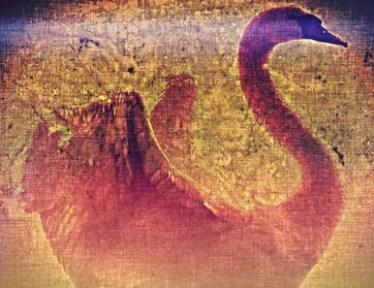 """Viejo muere el cisne"" de Aldous Huxley"