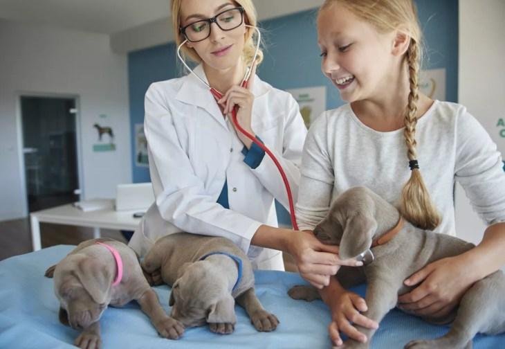Ein Leitfaden für Tierhalter zu CBD